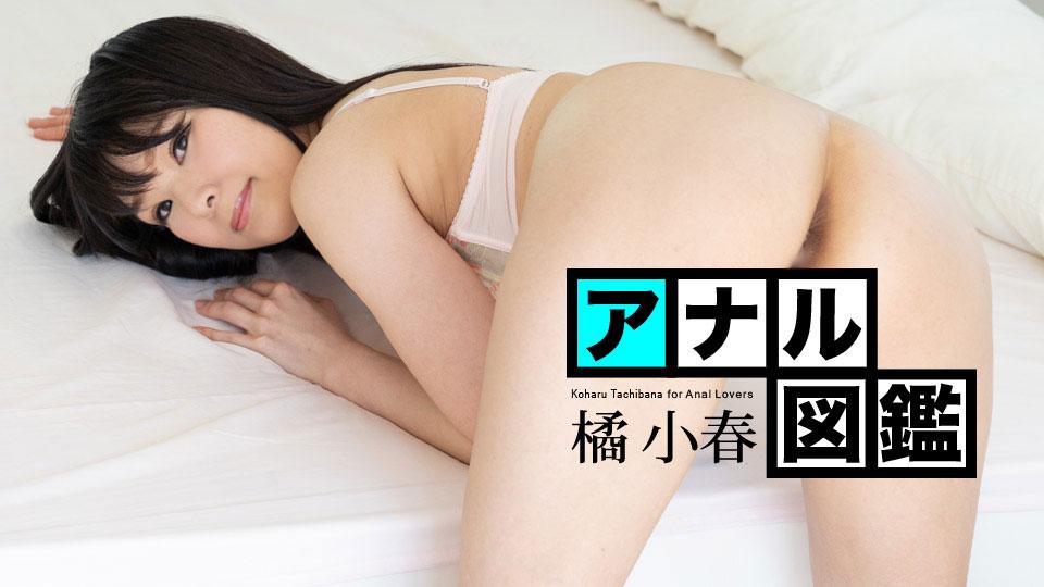 橘小春アナル図鑑